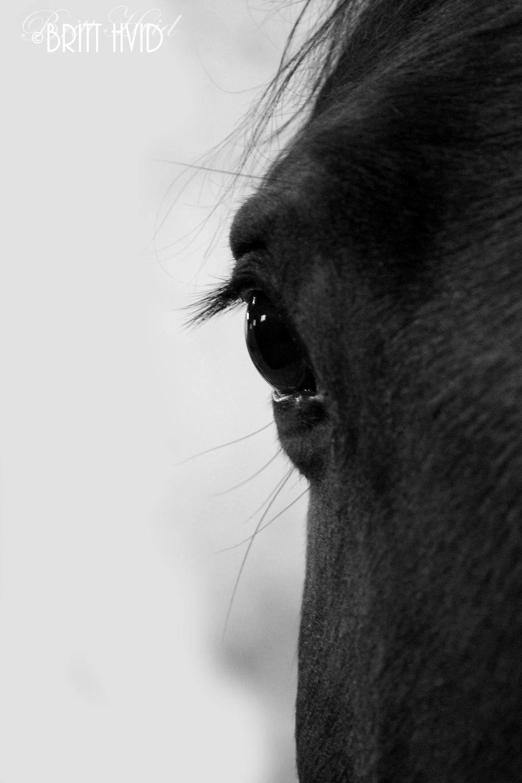 Horse's eye by BHvid