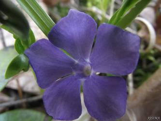 Purple flower by Ajsima