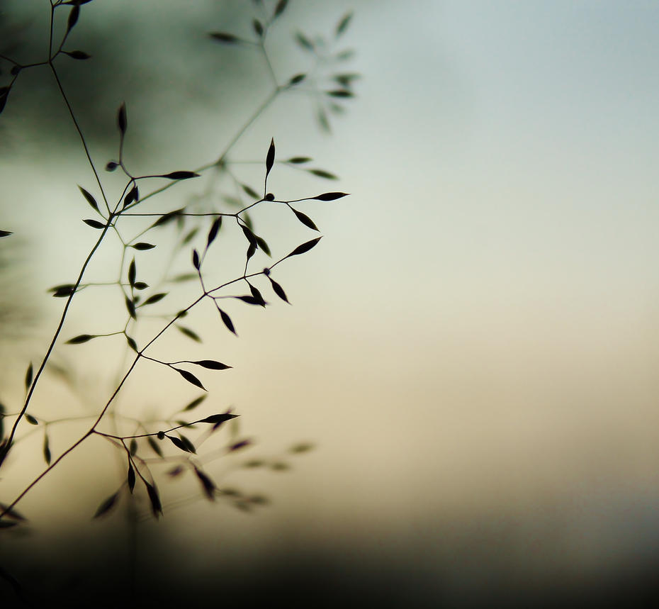 Peaceful moment by Larxxa