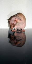 Rat Reflection 4 by Harpyen