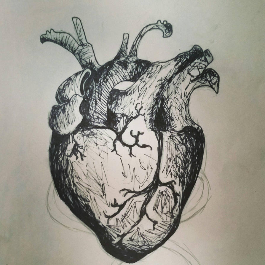 Heart by FMAFREAK8