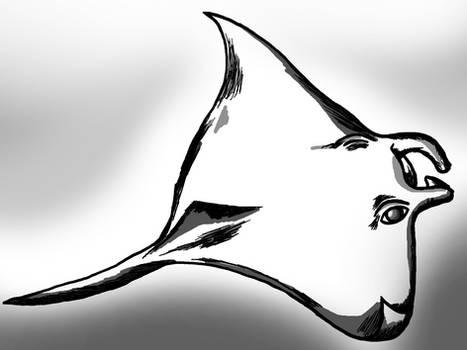 Manta Ray black and white