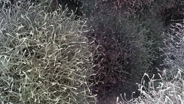 Zbrush Doodle: Day 2315 - Tumbleweeds