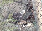 Minnesota Zoo 68