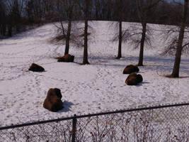Minnesota Zoo 95 by KodyBoy555