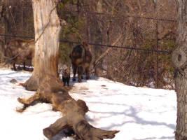 Minnesota Zoo 96 by KodyBoy555