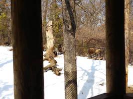 Minnesota Zoo 97 by KodyBoy555