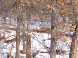 Minnesota Zoo 100 by KodyBoy555