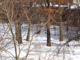 Minnesota Zoo 102 by KodyBoy555