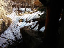 Minnesota Zoo 104 by KodyBoy555
