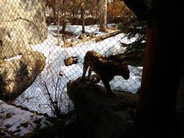 Minnesota Zoo 105 by KodyBoy555