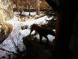 Minnesota Zoo 106 by KodyBoy555