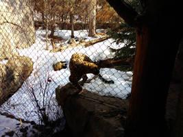 Minnesota Zoo 107 by KodyBoy555