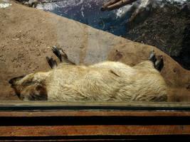 Minnesota Zoo 108 by KodyBoy555