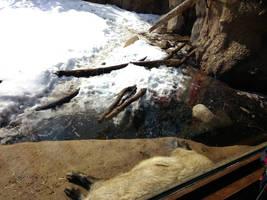 Minnesota Zoo 109 by KodyBoy555