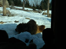 Minnesota Zoo 112 by KodyBoy555