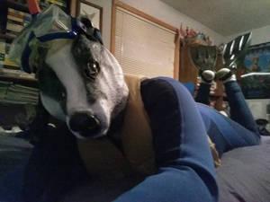 Me as a badger in scuba gear