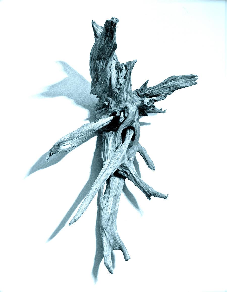 Wood 1 by JessWide
