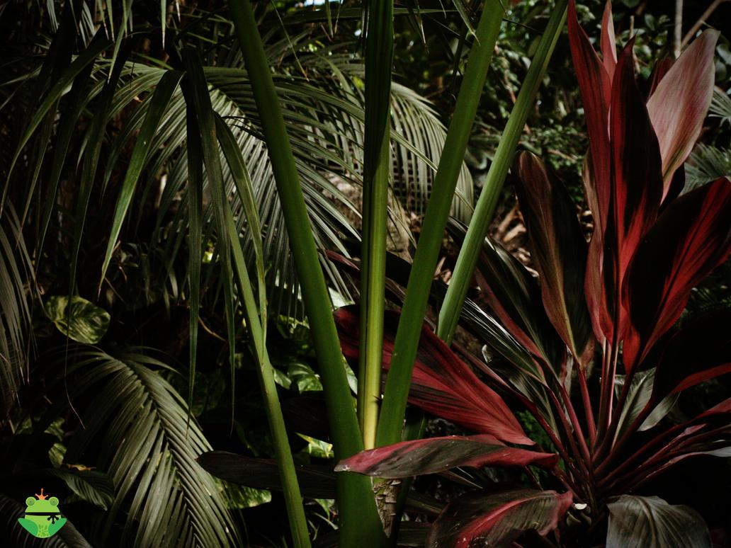 Jurassic plants - photo#22