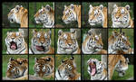 Tiger head angles