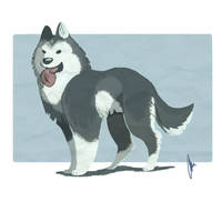 Malamute Design by amandas-sketches