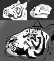 Day 3: Tiger head anatomy by amandas-sketches