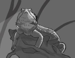 Day 4: Bearded Dragon