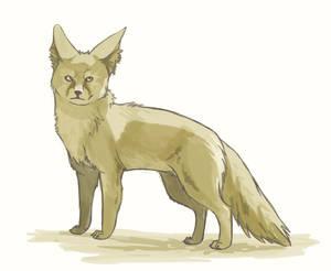 Day 6: Fennec Fox