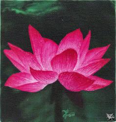 Lotus flower (fleur de lotus)