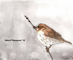 House Sparrow Color painting by Grandparob112