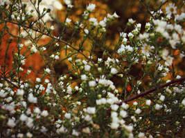 Autumn Daisies by Lochnessica