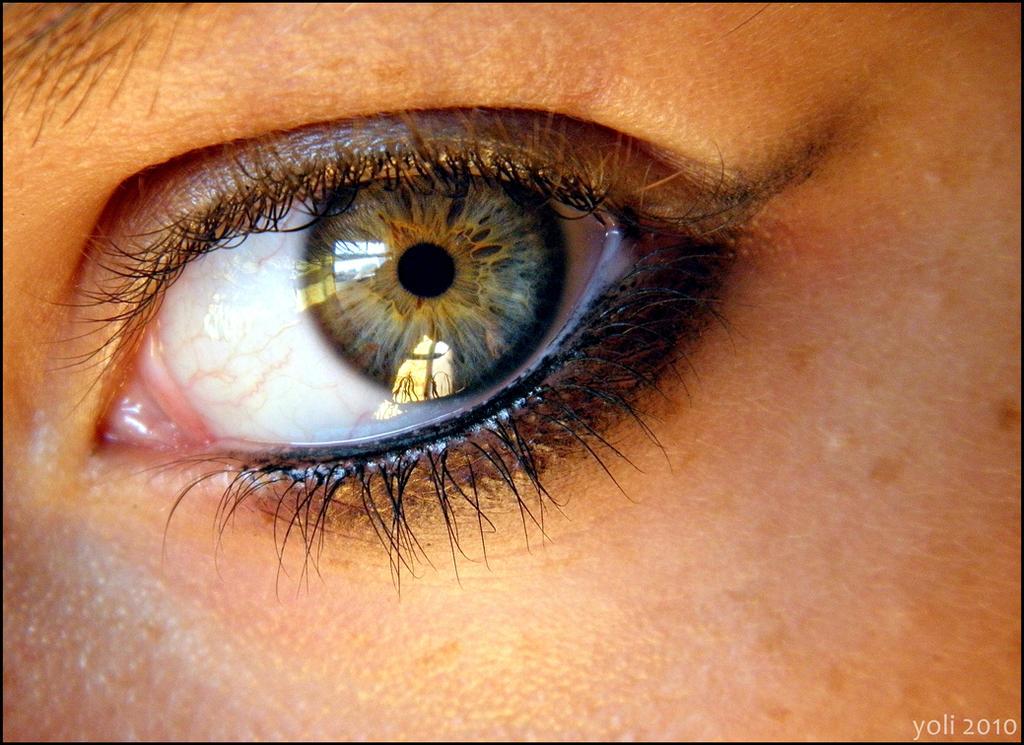 Blue Eyes Gt Green Gt Hazel Gray Gt Amber Gt Brown