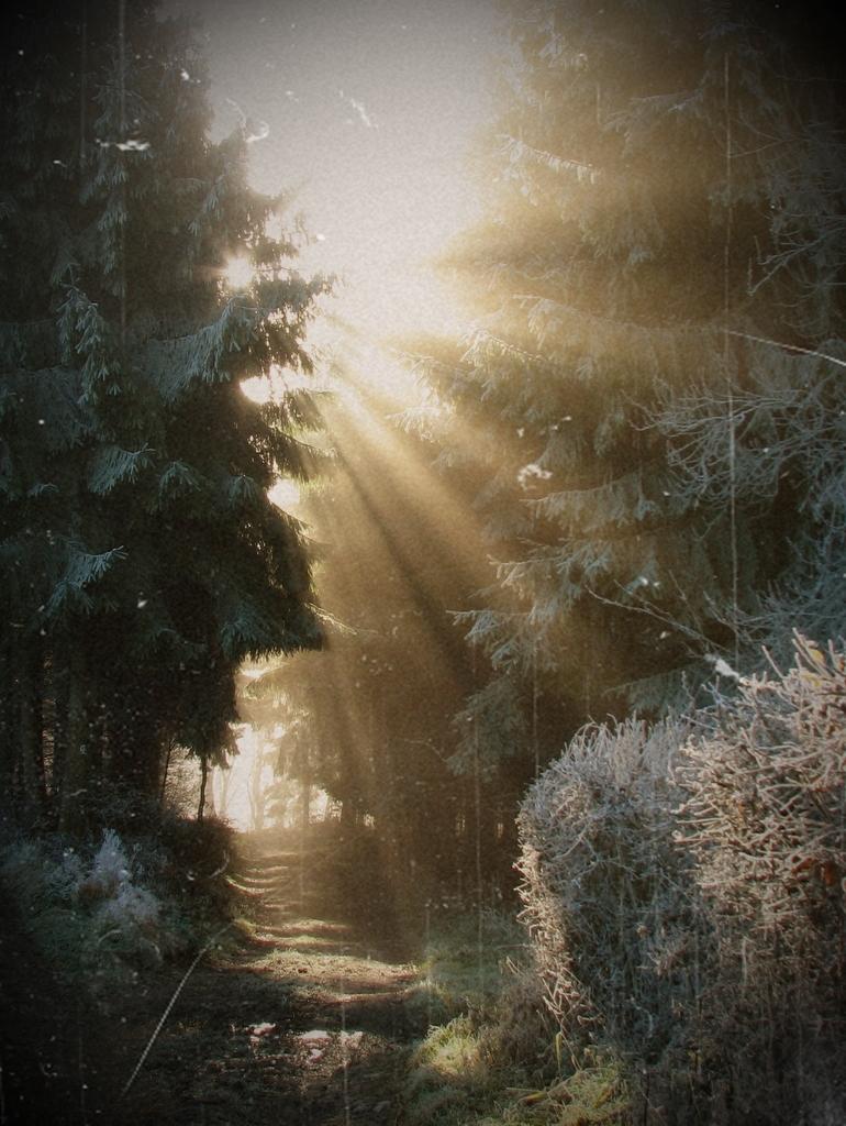Sunshine by guidoneko