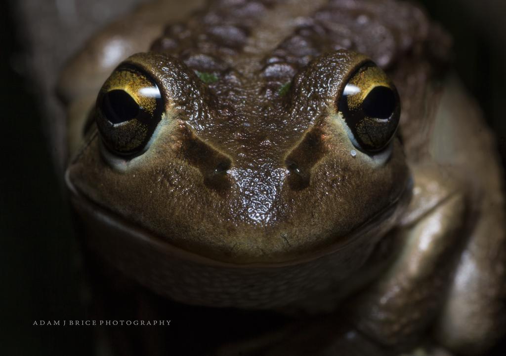 Froggie Smile by outstar1979