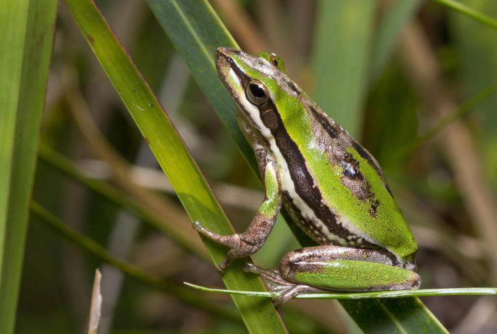 Little Green Frog by outstar1979