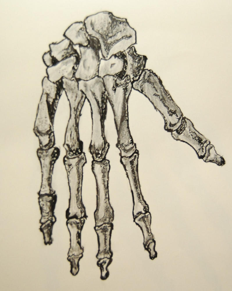 Pin Hand Of Skeleton H...