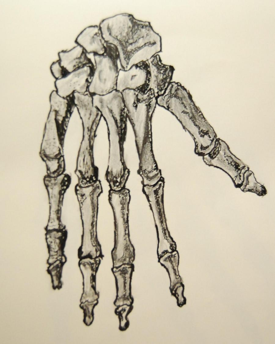 Skeleton Hand 2 by freefall149 on DeviantArt