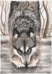 Playful Wolf