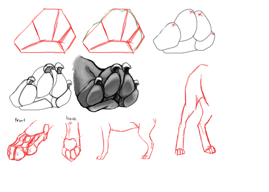 Steps To Draw A Dog And Cat