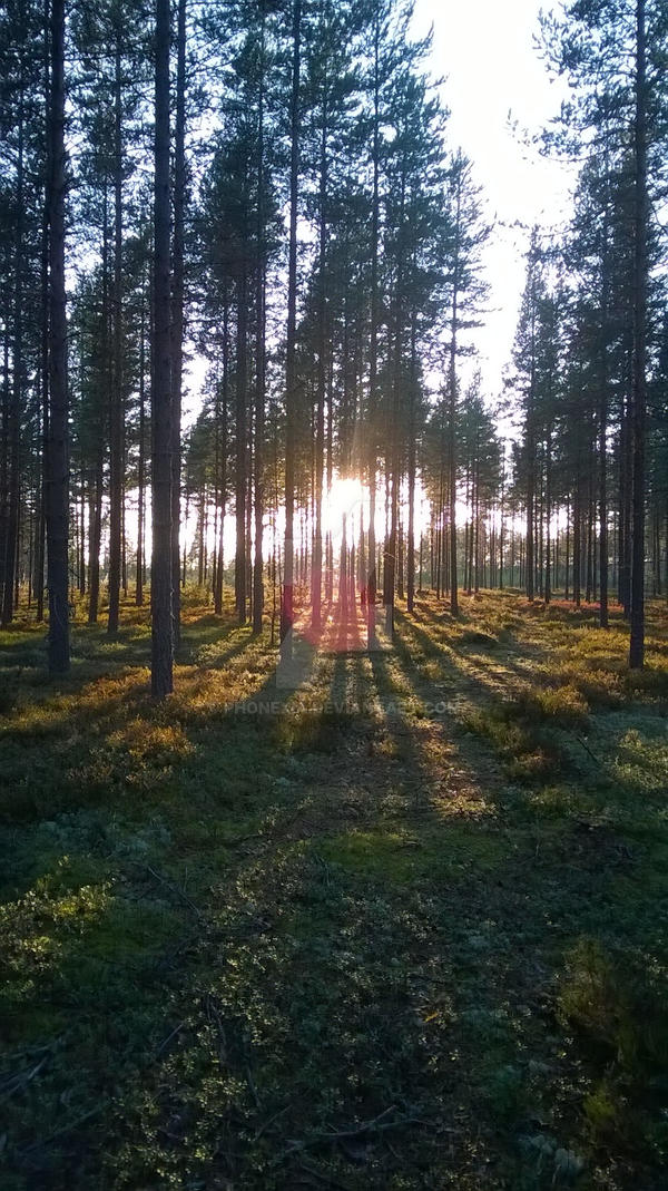 Sunset into woods by Phonexia