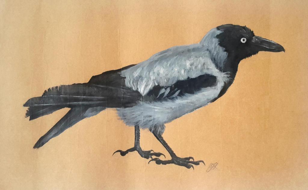 Corvus corvix by Phonexia