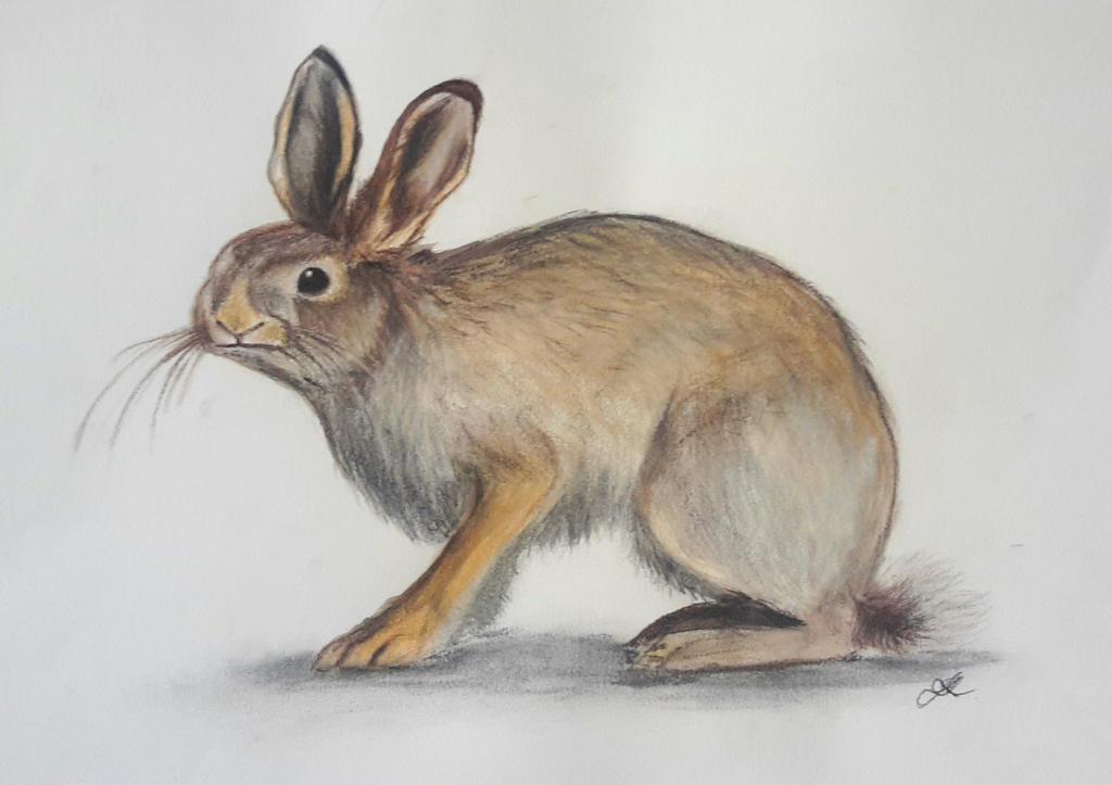 A rabbit by Phonexia