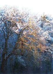 Winter Wonderland 2 by camillo1978
