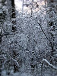 Winter Wonderland 3 by camillo1978