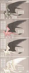 Reference - Dutch Angel Dragon Anatomy by TwilightSaint