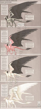 Reference - Dutch Angel Dragon Anatomy