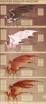 Reference - Western Dragon Anatomy