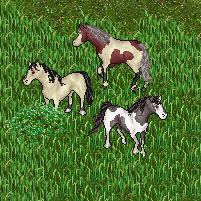 Ponyponypony by EdwardIV