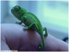 Urban Chameleon by RexTull