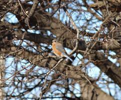 Bluebird?